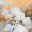 Dried frozen plant shines like a white flower — Stock Photo #66925533