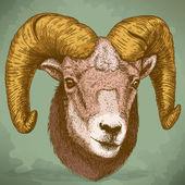 Vector illustration of engraving ram head — Stock Vector