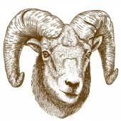 Vector illustration of engraving ram head — Vettoriale Stock