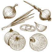 Engraving illustration of onion — Stockvector