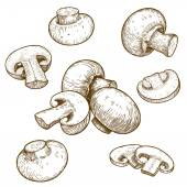 Engraving illustration of mushrooms champignons — Vecteur