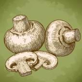 Engraving illustration of champignons — Stock Vector