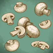 Engraving illustration of mushrooms champignons — Stock Vector