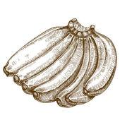Engraving illustration of bananas — Stock Vector