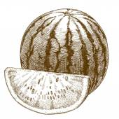Engraving  illustration of watermelon — Stock Vector
