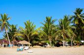 Tropical beach  bungalow and coconut trees — ストック写真