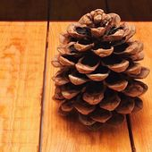 Pinecone on wooden board — Stock Photo