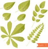 Autumn leaves — Stock Vector