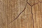 Gamla träd tvärsnitt — Stockfoto