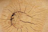 Starý strom průřez — Stock fotografie