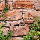 Vieux mur de pierre avec des plantes — Photo