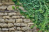 Old Stone Wall With Plants — Stock Photo