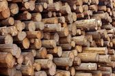 Woodpile of stacked wood logs — Stock Photo