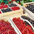 Black And Red Currants Berries Harvest In The Garden — Stock Photo #72797615