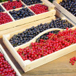 Black And Red Currants Berries Harvest In The Garden — Stock Photo #72797635