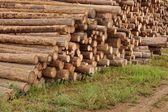 Grande mucchio di legno di tronchi — Foto Stock