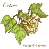 Cotton branch Banner — Stock Vector