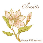 Clematis greeting card with flowers — Stock Vector