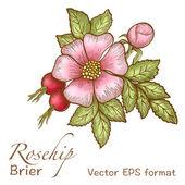 Rosehip greeting card — Stock Vector