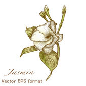 Jasmin greeting card with flower — Stock Vector