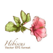 Hibiscus greeting card with flower — Stock Vector