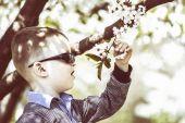 Boy examines a flowering tree — Stock Photo