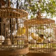 Yellow birds in cages — Stock Photo #70153903