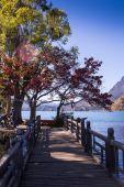 Clara Lago rodeado de bosque de otoño — Foto de Stock