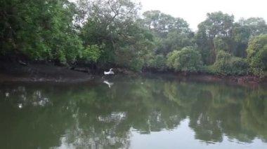 波状の湖の水に映る木々 — ストックビデオ