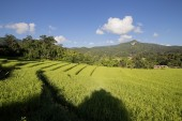 Rice field with sunray — Stock Photo
