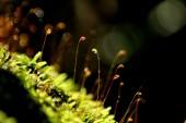 Dew Drop on moss — Stock Photo