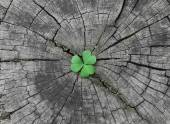 Green seedling growing from tree stump — Stock Photo