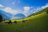 Grazing Horse in the mountains — Stock Photo