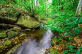 Der Stream gemäßigter Regenwald — Stockfoto