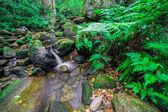 The Stream temperate rain forest — Stock Photo