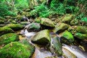 Cachoeira na floresta tropical — Fotografia Stock