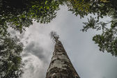 View looking up tree — Stock Photo