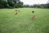 Dogs romp in the yard — Stock Photo