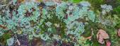 Lichen covered stone — Stock Photo