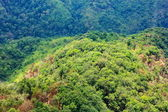 Aerial view of the forest — Stock Photo