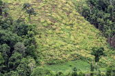 Aerial of  cut trees on ground in rainforest — Stock Photo