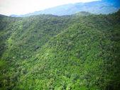 Vista aerea della foresta — Foto Stock