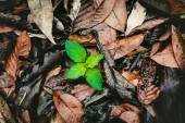 Green plant growing among the dry leaves — Stock Photo