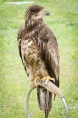 Birds of prey — Stock Photo