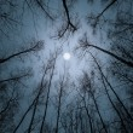 Cold autumn night. — Photo #60528749