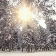 Cold winter forest. — Stock Photo #64718097