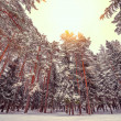 Cold winter forest. — Stock Photo #64721073