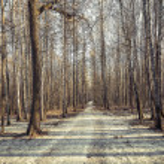 Long path. — Stock Photo #69264135