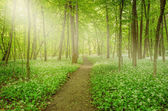 Sunshine in the forest. — Stock Photo