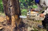 Man with chainsaw cutting the tree — Stock Photo